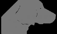 Vector-Grafiken