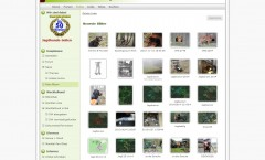 Wachtelhunde Fotogalerie