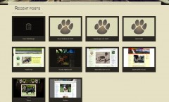 Canis Webdesign
