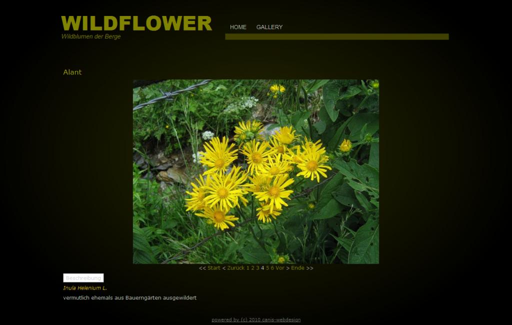wildflower_2010-2