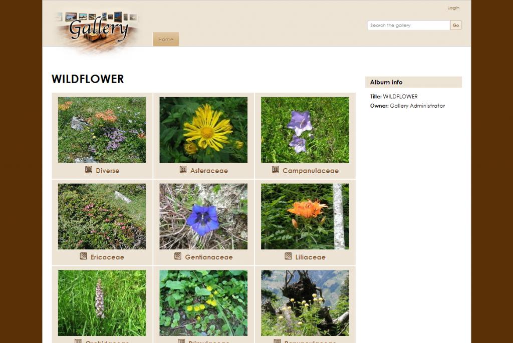 wildflower_2011